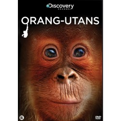 Discovery Channel : Orang-utans